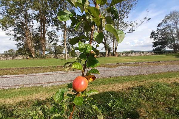 green flag native orchard ballyglunin station tourist attraction galway